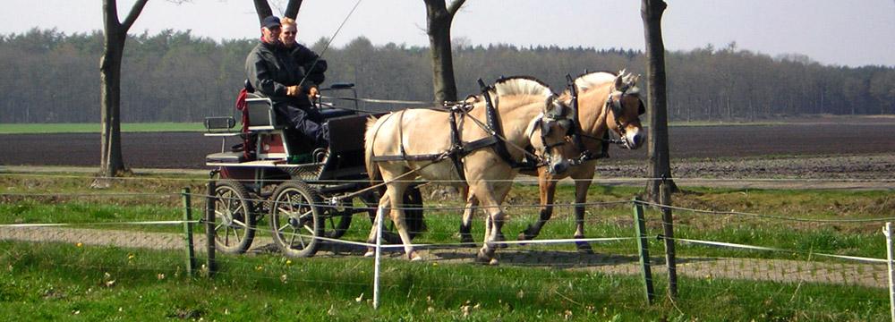 Paarden-op-de-Kibbelhoeve